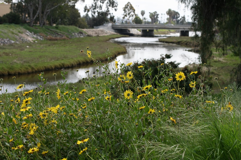 Rose Creek Salt Marsh in Pacific Beach, California
